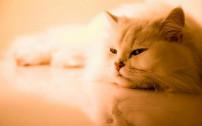 ネコちゃんのシッティング